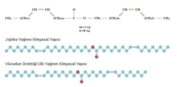 Jojoba Yağının Kimyasal Yapısı