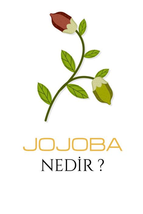 Jojoba Nedir ?